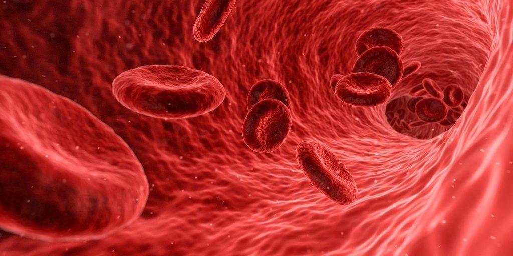 Blood cells 1