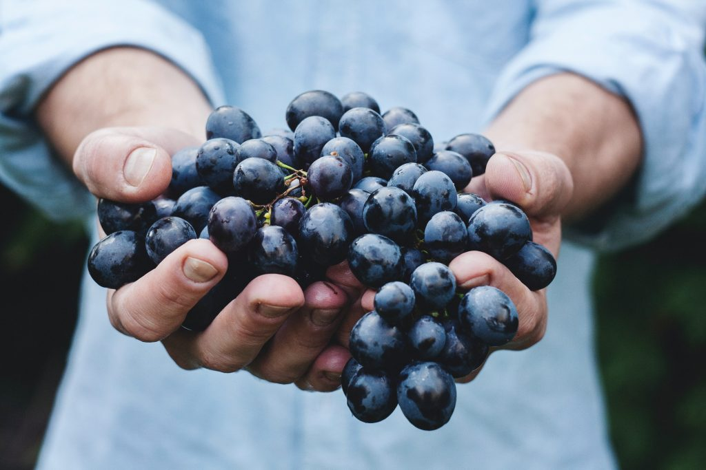 grapes Most heathy fruits | Best Fruits | Most Nutritious Fruits