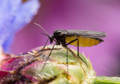 Get Rid of Gnats